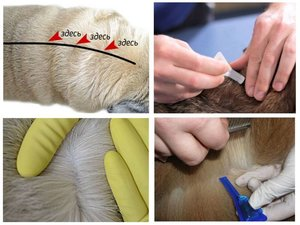 Обработка животных от клещей. Советы ветеринара Череповец