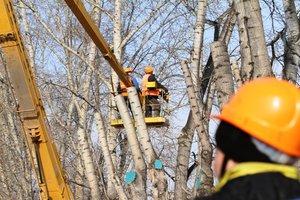 Спил и кронирование деревьев в Вологде