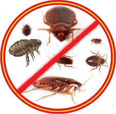 Уничтожение насекомых в Орске