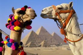 Египет из Оренбурга в НОЯБРЕ!!! Большой выбор отелей по привлекательной цене!