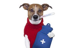 Лечение собак в Череповце