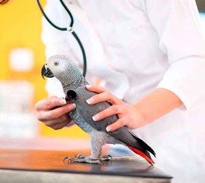 Лечение попугаев и других птиц