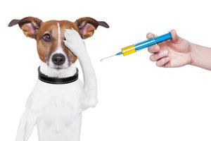 Какие прививки собакам в Орске самые важные?