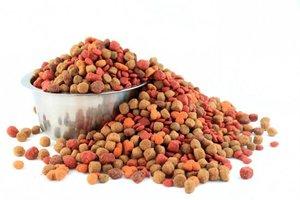 Korma56. ru рассказывает как выбрать сухой корм для собак