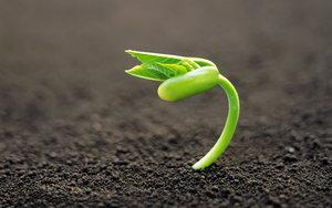 Сапропель органическое удобрение