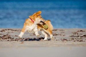 3 важные причины играть с вашей собакой