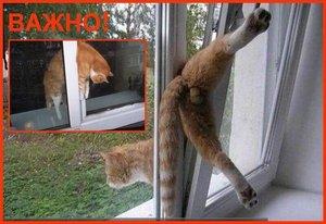 Окно в режиме «проветривание» – опасность для кошки!
