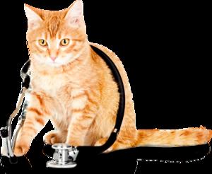 Ветеринар в Череповце
