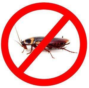 Появились тараканы?