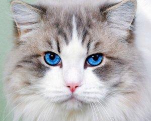 Безболезненная кастрация кота в Туле
