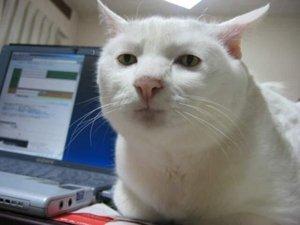 30 самых интересных фактов о кошках прямо сейчас!