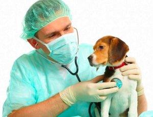 Ветеринарный врач в Туле - приходите к нам лечиться!