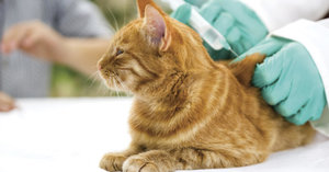 Прививки кошкам Орск
