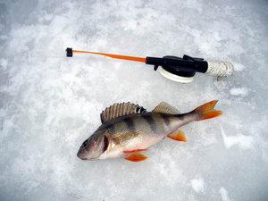 Купить снасти для зимней рыбалки в Оренбурге по доступной цене