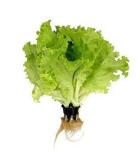 Пластиковые стаканчики для выращивания салата