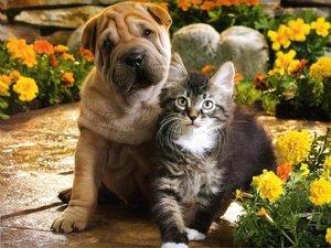 Льготная кастрация и стерилизация собак и кошек!