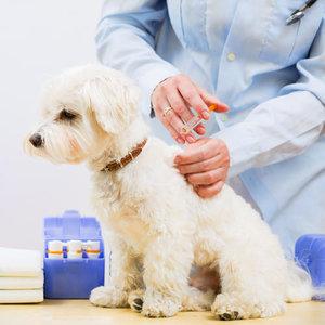 Прививки животным – когда и в каких целях делать?