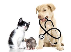 Круглосуточная связь со специалистом / Вызов ветеринара на дом