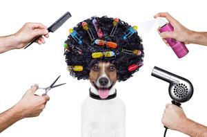 Парикмахерская для собак на Молодежной