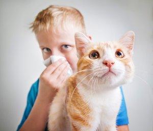 Собаки и кошки, не вызывающие аллергию у людей . Как завести кошку или собаку, если есть аллергия. 🤧😢🐈🐕