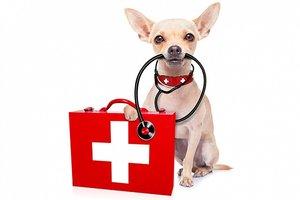 Ветеринарная аптечка питомца