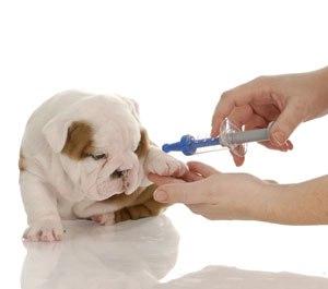 анализ крови собаки расшифровка