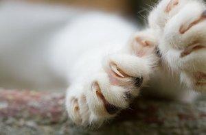Доказано, что удаление когтей обрекает кошек на мучения