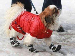 Как защитить собаке лапы зимой?