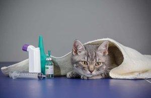 Ветеринарня клиника Новокузнецк Экстренная помощь животным