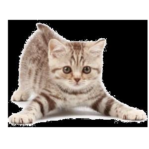 Прививки кошкам в Череповце
