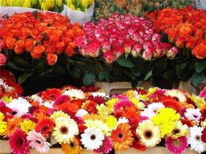 Цветочный магазин Новотроицк