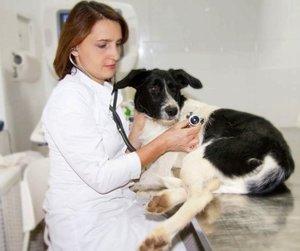 Диагностика животных в Туле