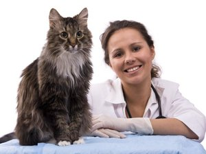 Ветеринар в городе Тула