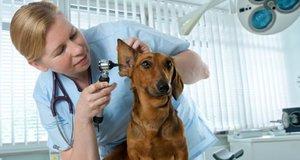 Ветеринарная клиника в Череповце