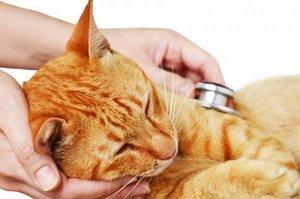 Диагностика и лечение домашних животных в Орске