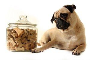 Купить корм для собак в Череповце