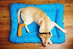 Ветеринарная ортопедия в Туле - лечение заболеваний различной сложности и характера
