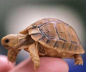 Поступление замороженных смесей для черепах