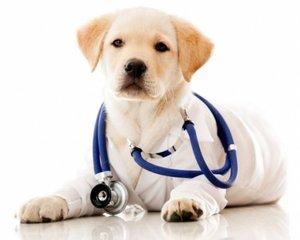 Хорошая ветеринарная клиника по доступной цене!