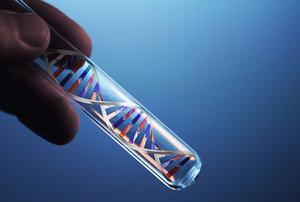 ДНК. УСТАНОВЛЕНИЕ ОТЦОВСТВА. ЦЕНА АНАЛИЗА