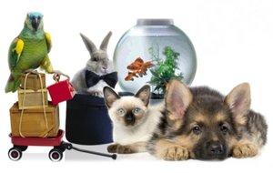 Товары для животных (кошек, собак, грызунов, птиц, рыб, черепах)