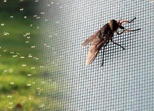 Надежная защита от насекомых! Закажите москитную сетку!