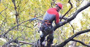 Опиловка деревьев в Оренбурге