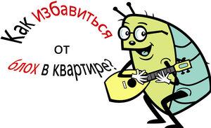 Выведение блох навсегда в Вологде