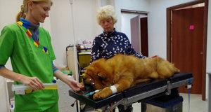 Ветеринарная помощь в Туле - круглосуточно, без выходных!