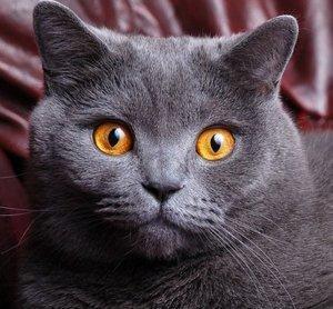Кастрация котов в Туле - безболезненно, быстро, профессионально!