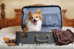 В отпуск с собакой!