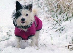 Чем болеют собаки зимой?