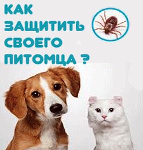 Средства от клещей для собак и кошек