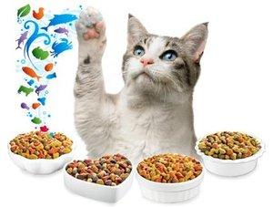 Корм для кошек как выбрать?Выбираем с «Мистер Плюш»